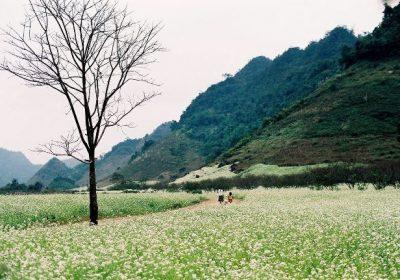 Kinh nghiệm du lịch Mộc Châu mùa hoa cải