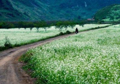 Thung Nai – Mộc Châu mùa cải trắng 3 ngày 2 đêm