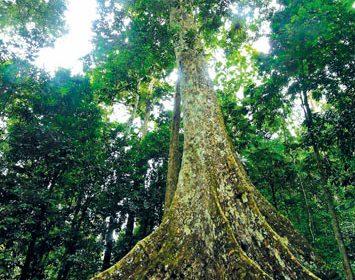 Hà Nội – Vườn quốc gia Cúc Phương 2 ngày 1 đêm
