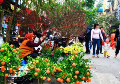 Những chợ hoa tết Hà Nội