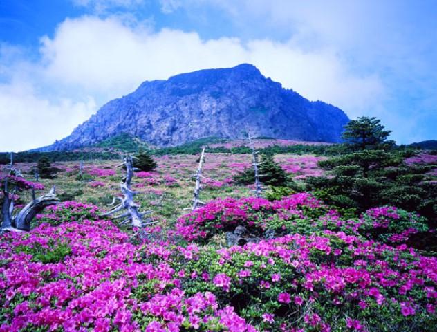 Những điểm tham quan nổi tiếng trên đảo Jeju Hàn Quốc