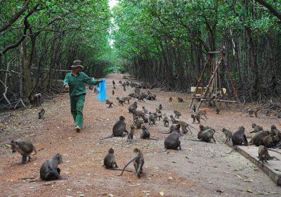 Du lịch Cần Giờ – Đảo Khỉ 1 ngày