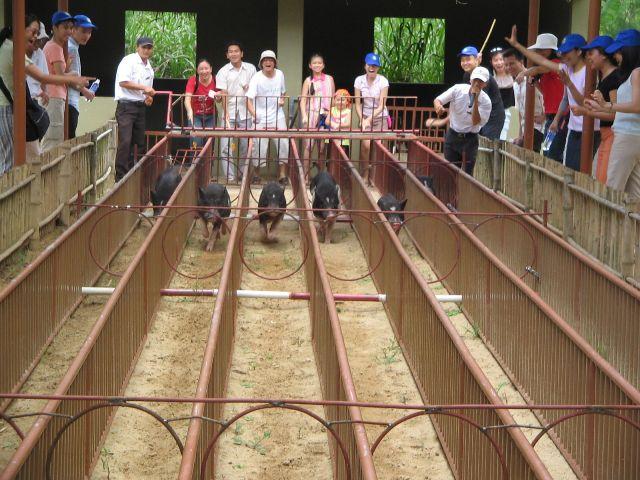 Kết quả hình ảnh cho đua heo thác yangbay