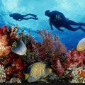 lăn biển ngắm san hô