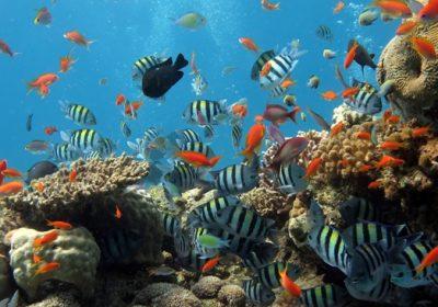 Câu cá – lặn ngắm san hô ở bán đảo Sơn Trà 1 ngày