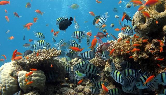 Image result for ngắm san hô ở hòn một