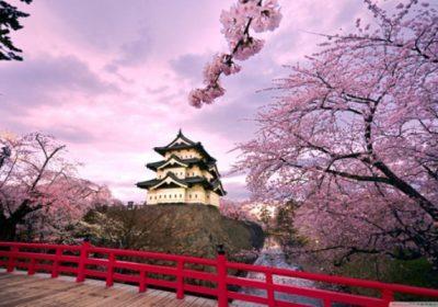 Nhật Bản – ngắm hoa anh đào 5 ngày 4 đêm