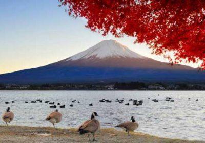 Nhật Bản mùa lá đỏ 7 ngày 6 đêm