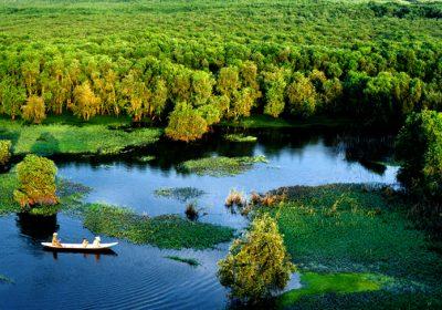 Rừng tràm Trà Sư – Khám phá hệ sinh thái đặc sắc