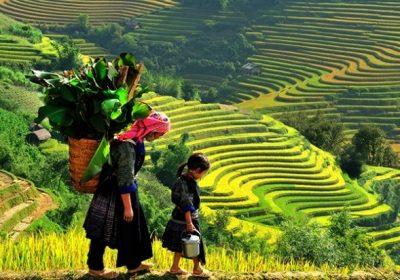 Tây Bắc: Thung Nai – Mai Châu – Mộc Châu – Điện Biên – Sapa 4 ngày