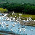 vườn quốc gia giao thủy